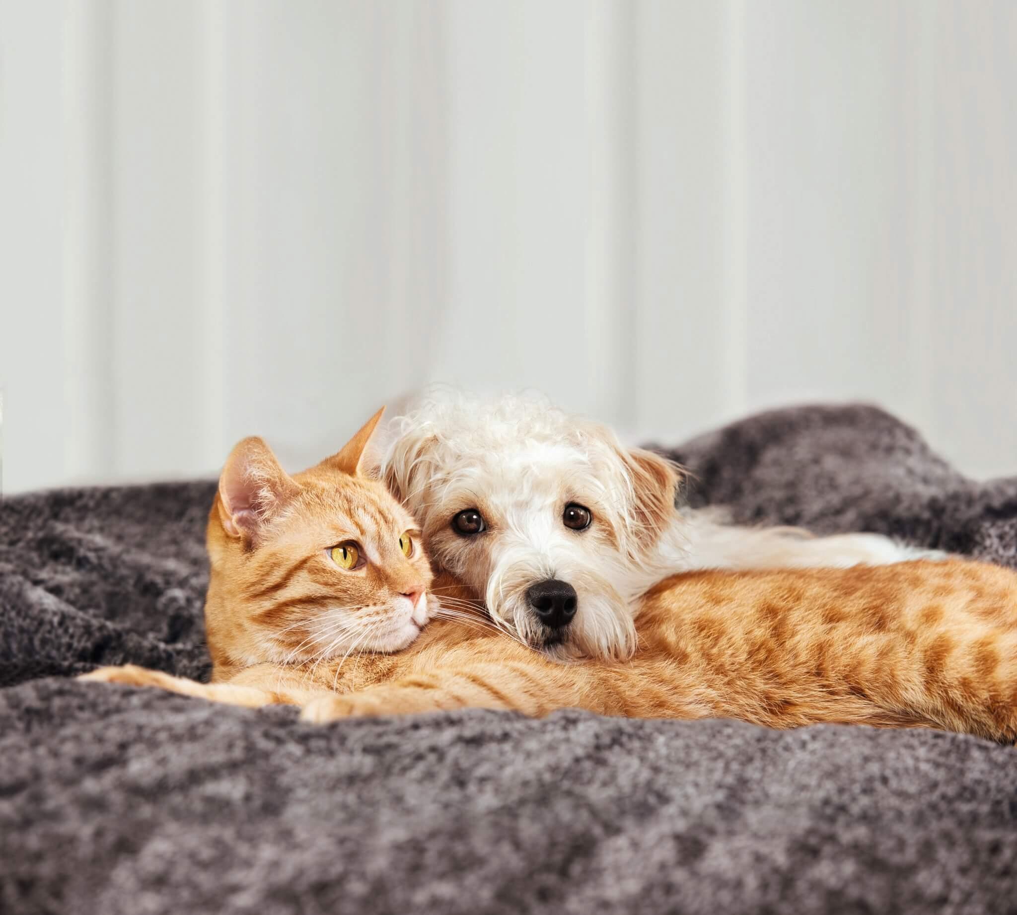 Hund und Katze schmusen