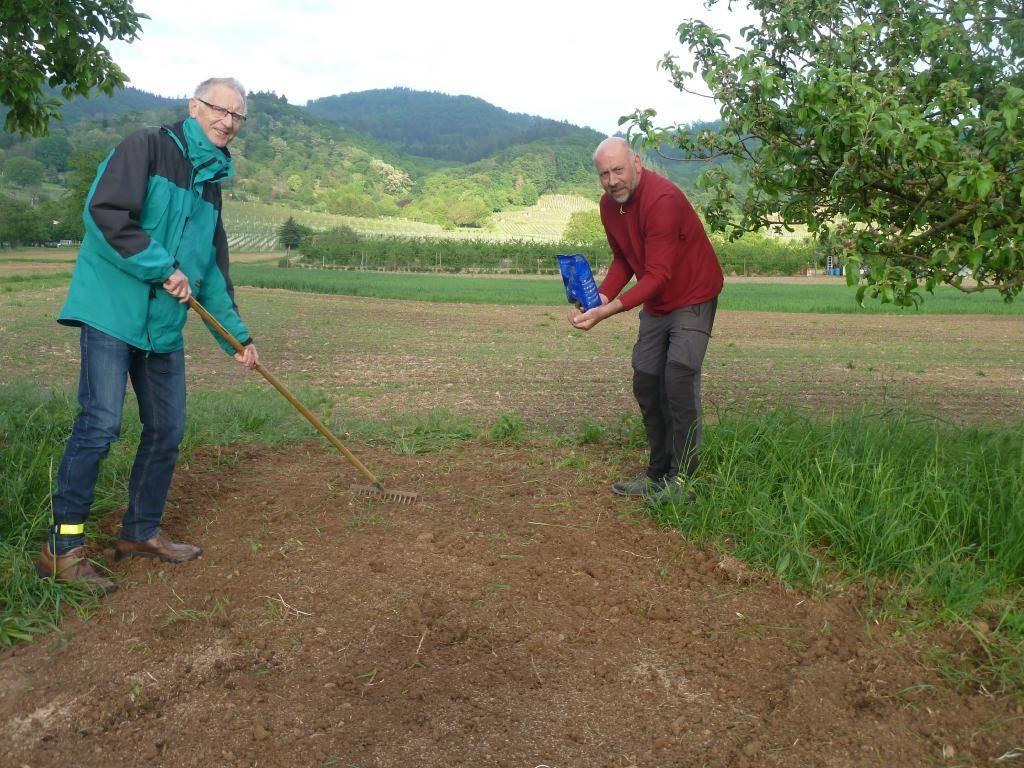 Egon Müller und Jürgen Steinle pflanzen einen Blühstreiufen für die Bienen